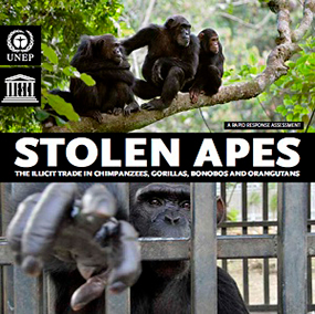 "2013: ""Stolen Apes: The Illicit Trade in Chimpanzees, Gorillas, Bonobos and Orangutans"" published"
