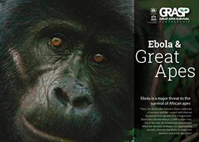 "2016: ""Ebola & Great Apes"" published"