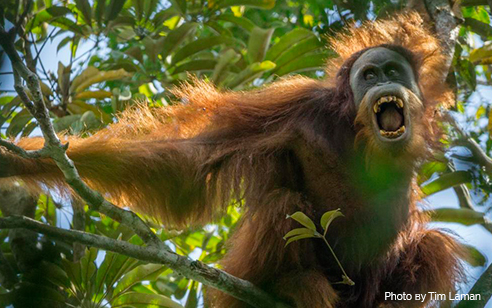 Primates in peril: highlighting endangered species at International Primatological Congress